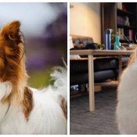#热征#宠物#一只基本款狗狗的基本款EDC